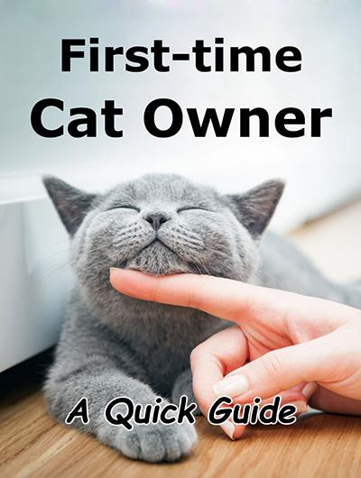 persiapan sebelum adopsi kucing untuk pemula